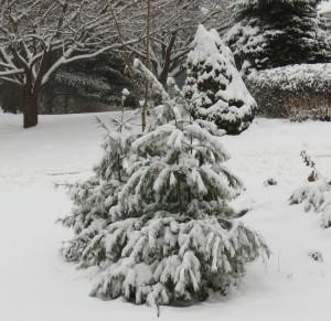 jan snow 001